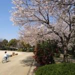 桜のたぬき広場