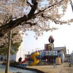 桜咲く競輪場