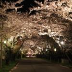 岩脇公園桜まつり12
