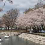 岩脇公園桜まつり4
