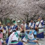 岩脇公園桜まつり2