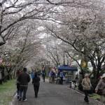 岩脇公園桜まつり1