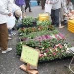 岩脇公園桜まつり9